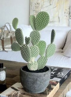 decor - furnishings You are in the right place about Cactus wallpaper Here we offer you the most be -