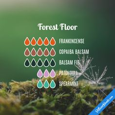 Forest Floor - Essential Oil Diffuser Blend