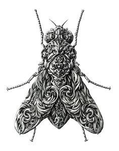 Little Wings on Behance, Alex Konahin