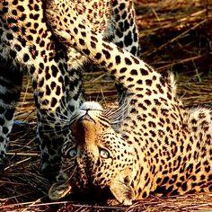 Safari Safari, Animals, Nature Reserve, Wilderness, Tours, Animales, Animaux, Animal, Animais