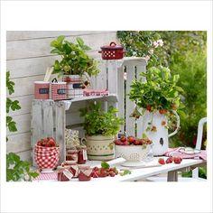 138 Best Garden Pot Decor Images Flowers Decorating Ideas Gardening