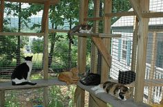 Catio-some people have toooo many cats...lol....