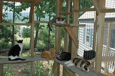 Catio-some people have toooo many cats...lol....