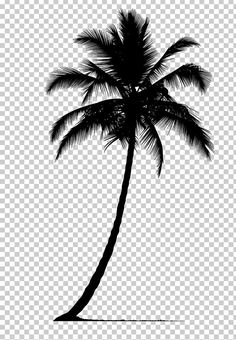 Arecaceae Silhouette Tree PNG - arecaceae, arecales, black, black and white, borassus flabellifer Palm Tree Png, Palm Tree Clip Art, Palm Tree Drawing, Palm Tree Silhouette, Silhouette Art, Free Tree Clipart, Tree Vector Png, Cartoon Palm Tree, California Palm Trees
