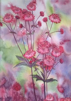 Astrantia by louise-art Watercolor Disney, Watercolor And Ink, Watercolor Flowers, Watercolor Paintings, Watercolors, Plant Painting, Painting & Drawing, D Flowers, Astrantia