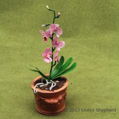 How to Make More than 40 Paper Plants and Flowers: Make Miniature Moon or Phalaenopsis Orchids