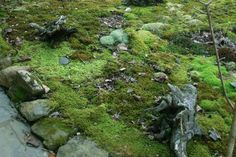 Shade Moss Garden, Gardenista