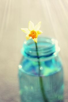 Buttercup Photography - Flower In A Mason Jar - Daffodil Photography - Aqua Blue Yellow Wall Art Photograph by Amy Tyler - Buttercup Photography - Flower In A Mason Jar - Daffodil Photography - Aqua Blue Yellow Wall Art Fine Art Prints and Posters for Sale