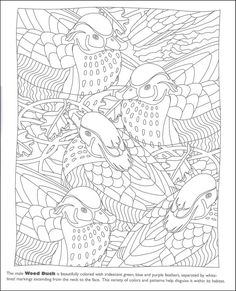 Hidden Feathers Coloring Book | Additional Photo (Inside Page)
