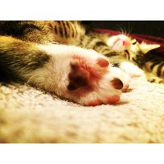 #cat #cats #meow #kat #kitty #kittenhood #nsx #kit #kitten #ferrari #キジトラ #キジシロ #仔猫 #ニャンズ #猫 #ねこ #ネコ # #tabbynsx.na12016/02/28 02:59:48
