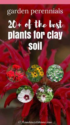 Clay soil is hard to garden in, but you wouldn't know it with these perennials that thrive in clay soil. And they're are a lot of plants with beautiful flowers that will grow in shade and sun. #fromhousetohome #perennials #clay #shadegarden