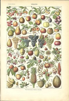 1922 - Poster - FRUITS - French Dictionary Color Illustration