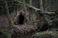 woodland dwellings by ellie davies   Pinned by www.modelina-architekci.com