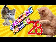 Смешные кошки 28 ● Приколы с животными 2015 ●  Funny cats vine compilation - Part 28