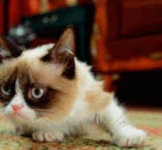 See more 'Grumpy Cat' images on Know Your Meme!
