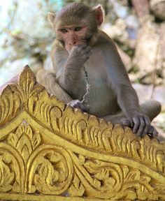 Monkey Temple - Mandalay, Burma