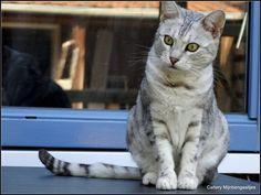 Earendil Silver Spotted *2011
