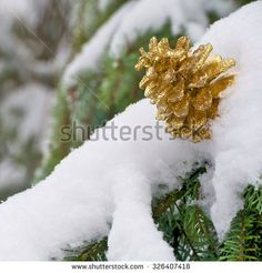 Golden pine cone on snow covered fir branch in close-up; Christmas motive  - stock photo