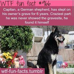 WTF Fun Fact #966