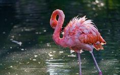 Preview wallpaper flamingo, bird, water, stand 3840x2400