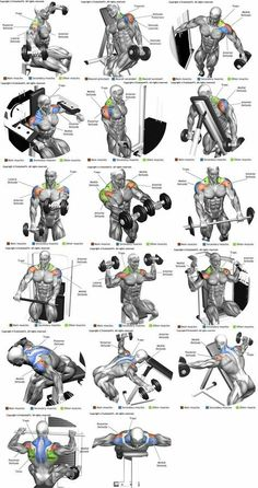 Workout Exercise Shoulder workouts to target specific muscle. - The Ultimate Shoulder Workouts Anatomy. We've put together this graphic of different types shoulder workouts. Knowing the anatomy of each muscle group is Gym Workout Tips, Weight Training Workouts, Biceps Workout, Fitness Workouts, Fitness Motivation, Sport Motivation, Traps Workout, Deltoid Workout, Workout Routines