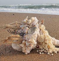Букет невесты из ракушек Shelley / Материалы: различные морские кораллы, морские ракушки, морские звезды, жемчуг морской натуральный, морская губка, кусок каменной морской соли из Мертвого моря, кусочки древесины, хлопок, декоративные элементы — натуральный белый коралл