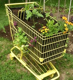 Shopping cart garden in the early stages of growth. Lined with trash bags to hold soil