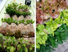 How do you like this vertical garden with herbs and strawberries? Read more to find out how to build your own! Small Garden Design, Small Space Gardening, Garden Spaces, Small Gardens, Container Gardening, Gardening Tips, Vertical Garden Planters, Herb Planters, Vertical Gardens