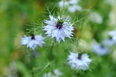 Discover five hardy annuals that you can sow in September for beautiful flowers next year, with advice from the experts at BBC Gardeners' World Magazine.