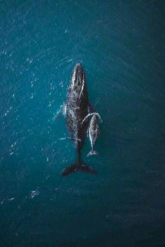 Whale - Mama & Baby  #love #animals