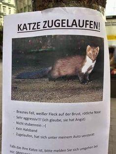 """""""Katze zugelaufen, Brille gesucht""""   27 Schilder, die mehr Fragen aufwerfen, als beantworten"""
