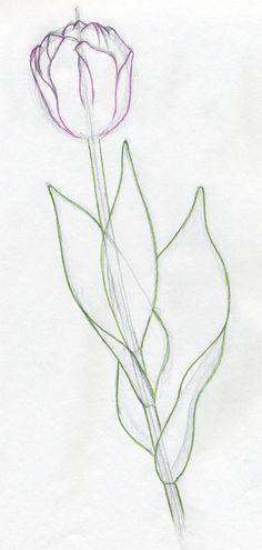 tulip-flowers14.jpg (400×840)