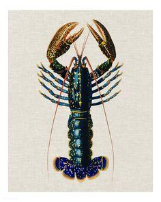 Antique Prints, Vintage Prints, Vintage Posters, Vintage Clocks, Vintage Decor, Vintage Art, Lobster Art, Lobster Tattoo, Science Illustration