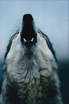 ❥ Howl at the moon~ Super Moon this Saturday! 3.5.12