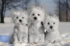 Found these guys on FB today. Just too sweet! What a Christmas card!