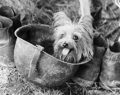 Accompanied his owner for 2 years during world war II. She entertained troops and saving Wynne's life once.