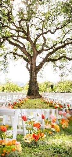 Hopland wedding at Campovida. Wedding Ceremony Details.  Beautiful giant tree. Bright colorful flowers. Outside wedding  venue.   Adeline & Grace Photography