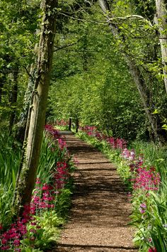 Fairhaven Garden, Norfolk, England.  A wet Norfolk Broads woodland garden made by Lord Fairhaven after 1947.