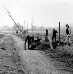 Joseph Beuys, 7000 Oaks – City Forestation Instead of City Administration, 1982. [7000 Eichen – Stadtverwaldung statt Stadtverwaltung]