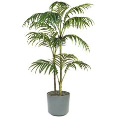 Indoor palm plants dying in wonderful house trees bamboo palm plant. Indoor Plants Clean Air, Indoor Palms, Indoor Trees, Fruit Trees, Trees To Plant, Palm Trees, Tropical Plants, Palm Plants, Bamboo Palm
