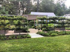 Well trained espalier fruit trees on the @landscapedesigners garden tour in the greater Boston area! #inspiration All American, New England Garden evening #apld #newengland #ma  #peagravel #landscapedesigner #gardendesigner #Gardendesign #hage #haver #jardim #Jardin #hortus #trädgård #Tuinen #庭 #园 #tuin #apld #garten #plantporn #gardenstyle  #improveyourworld #gardens #gardener #gardening #garden #apld17