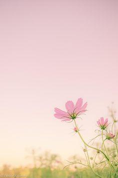 500px 上の Yusuke Kitamura の写真 Tender flower; 優しい花