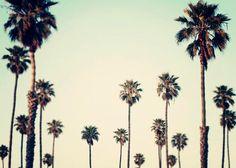 Landscape Photograph, Plam Tree Wall Art, Retro, California, Summertime, Plam Trees, Ombre, Palm Tree Art, 5x7 Photograph