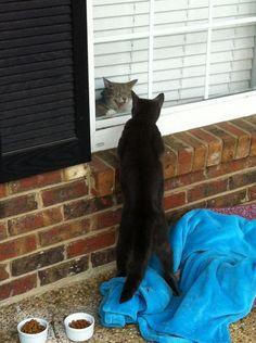 Guard cat!