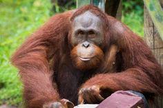 Soft Serve for Solaris - Virginia Zoo in Norfolk