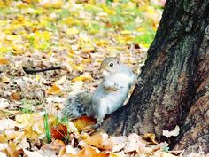 <3 scoiattolo <3
