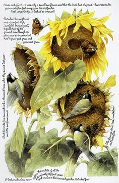 Marjolein Bastin - the story of 1 little sunflower seed Illustrations, Illustration Art, Sunflower Illustration, Marjolein Bastin, Nature Sketch, Nature Artists, Dutch Artists, Botanical Prints, Cool Artwork