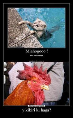 carteles chiste gallo gato desmotivaciones