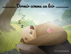 """Animal expression """"Dormir comme un loir"""" French Phrases, French Words, French Quotes, French Sayings, French Teacher, French Class, Teaching French, French Expressions, Expression Imagée"""