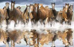 Shop our vast assortment of horse wallpaper and horse wall murals at Murals Your Way. Horse Mural, Horse Art, Majestic Horse, Beautiful Horses, Pretty Horses, Mustangs, Wild Horses Running, Horse Water, Murals Your Way